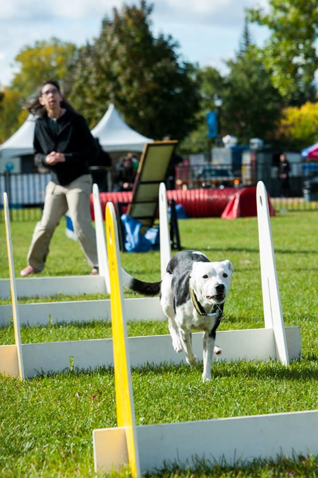 PHOTOS DOG FEST 3