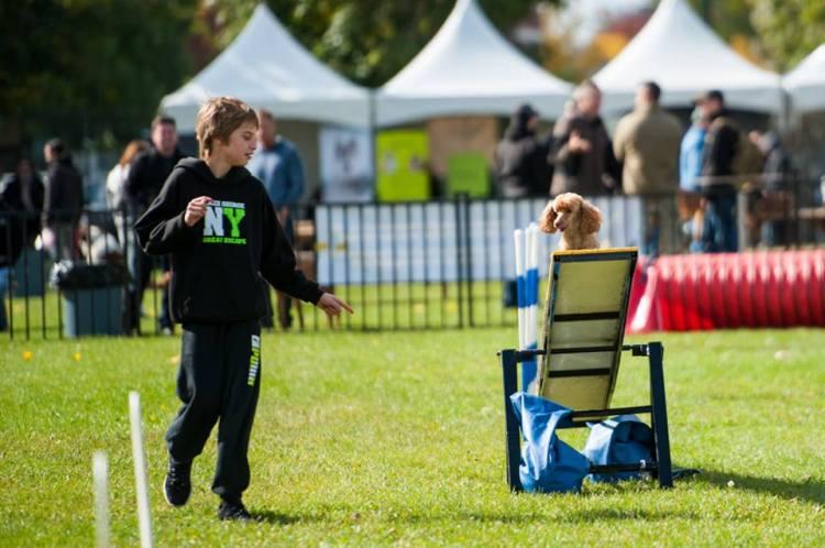 PHOTOS DOG FEST 4